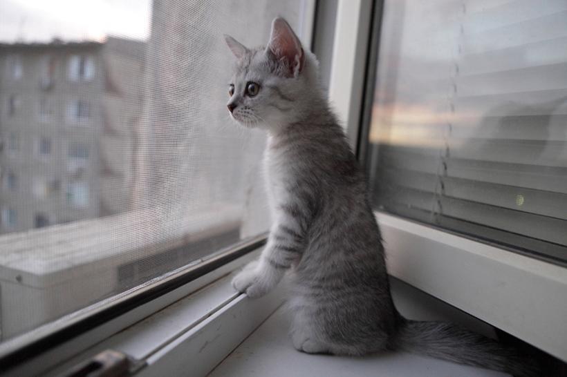 Москитная сетка антикошка Pet-Screen